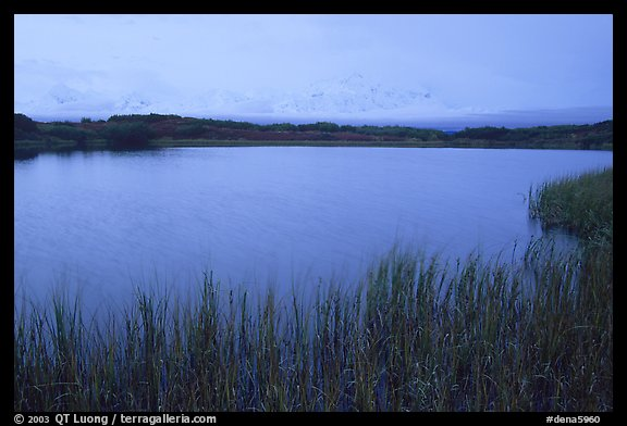 Mt McKinley in the fog from Reflection pond, dawn. Denali National Park, Alaska, USA.