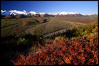 Alaska Range, braided rivers, and shrubs from Polychrome Pass, morning. Denali  National Park, Alaska, USA.
