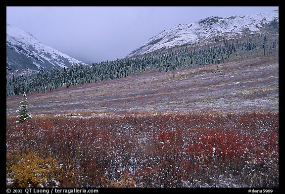 Fresh snow on tundra near Savage River. Denali  National Park (color)