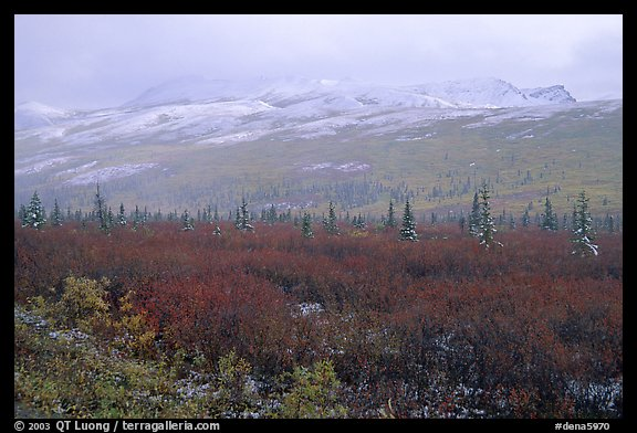 Fog and fresh snow on tundra near Savage River. Denali National Park, Alaska, USA.