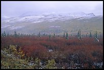 Fog and fresh snow on tundra near Savage River. Denali National Park ( color)