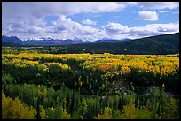 Yellow aspens and Panorama Range, Riley Creek drainage. Denali  National Park, Alaska, USA.