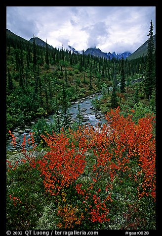 Berry plants in fall color and Arrigetch creek. Gates of the Arctic National Park, Alaska, USA.