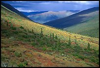 Arrigetch valley with caribou. Gates of the Arctic National Park, Alaska, USA. (color)