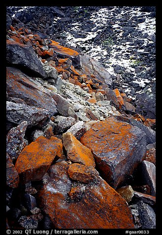 Lichen covered rocks at the base of Arrigetch Peaks. Gates of the Arctic National Park (color)