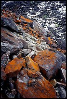 Lichen covered rocks at the base of Arrigetch Peaks. Gates of the Arctic National Park, Alaska, USA.