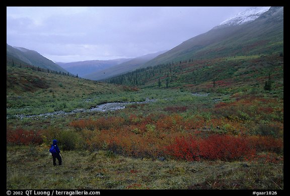 Backpacker in Arrigetch Valley. Gates of the Arctic National Park, Alaska (color)