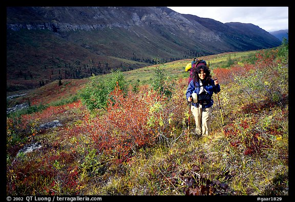 Backpacker in Arrigetch Creek. Gates of the Arctic National Park, Alaska (color)