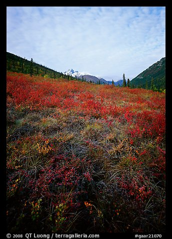 Tundra tussocks and Arrigetch Peaks in the distance. Gates of the Arctic National Park (color)