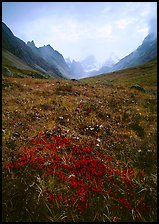 Low tundra in autum color and Arrigetch Peaks. Gates of the Arctic National Park, Alaska, USA.