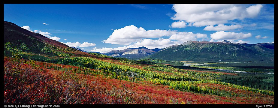 Boreal forest in autumn. Gates of the Arctic National Park (color)