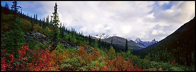 Boreal forest landscape. Gates of the Arctic National Park (Panoramic color)