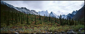 Taiga forest and peaks with fresh dusting of snow. Gates of the Arctic National Park (Panoramic color)