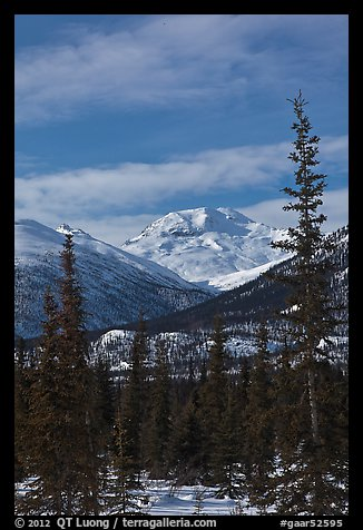 Forest and snowy Brooks Range mountains. Gates of the Arctic National Park (color)