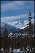 Forest and snowy Brooks Range mountains. Gates of the Arctic National Park, Alaska, USA. (color)