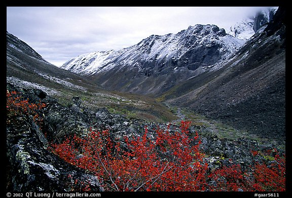 Aquarius Valley near Arrigetch Peaks. Gates of the Arctic National Park (color)