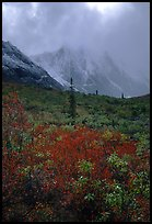 Tundra and Arrigetch Peaks in fog. Gates of the Arctic National Park, Alaska, USA. (color)