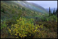 Arrigetch Valley in autumn. Gates of the Arctic National Park, Alaska, USA.