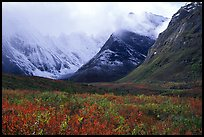 Tundra and Arrigetch Peaks partly hidden by clouds. Gates of the Arctic National Park, Alaska, USA.