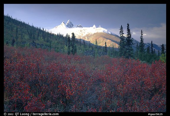 Arrigetch Peaks and tundra from Arrigetch Creek entrance, early morning. Gates of the Arctic National Park (color)