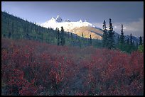 Arrigetch Peaks and tundra from Arrigetch Creek entrance, early morning. Gates of the Arctic National Park ( color)