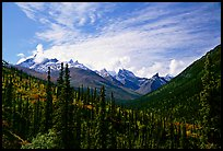 Arrigetch Peaks and spruce forest from Arrigetch Creek entrance, morning. Gates of the Arctic National Park, Alaska, USA.