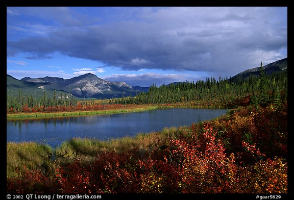 Alatna River valley near Circle Lake, evening. Gates of the Arctic National Park (color)