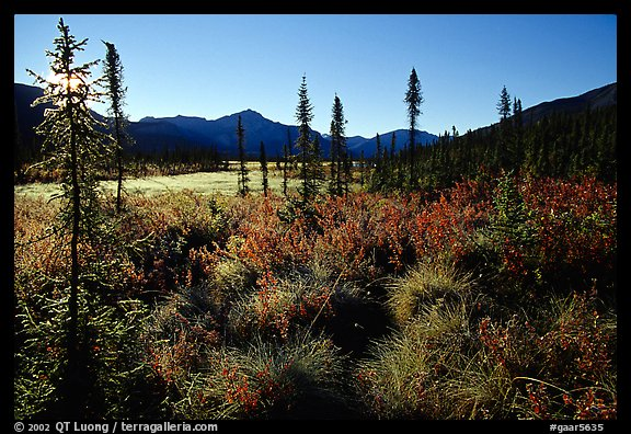 Tussocks near Circle Lake, Alatna River valley, early morning. Gates of the Arctic National Park, Alaska, USA.