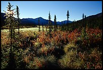 Tussocks near Circle Lake, Alatna River valley, early morning. Gates of the Arctic National Park, Alaska, USA. (color)