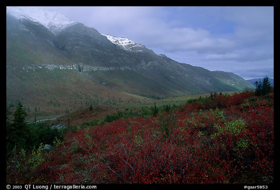 Shrubs and mountains in mist. Gates of the Arctic National Park (color)