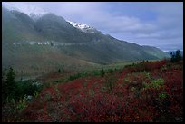 Shrubs and mountains in mist. Gates of the Arctic National Park, Alaska, USA.