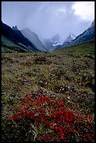 Tundra and Arrigetch Peaks. Gates of the Arctic National Park, Alaska, USA.