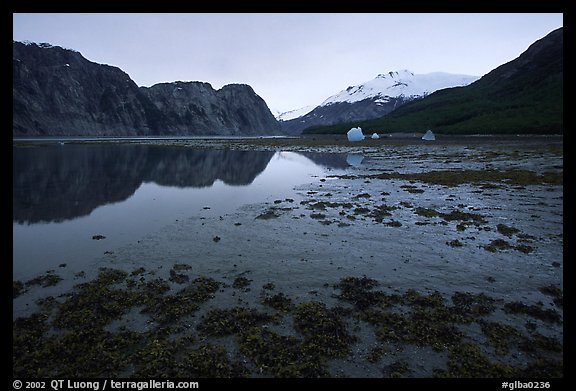 Mud flats above White Thunder ridge, Muir inlet. Glacier Bay National Park, Alaska, USA.