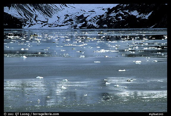 Icebergs and reflections, West arm. Glacier Bay National Park (color)