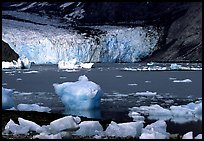 Mc Bride glacier. Glacier Bay National Park, Alaska, USA.