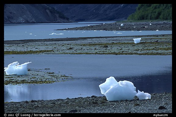 Icebergs and mud flats near Mc Bride glacier. Glacier Bay National Park (color)