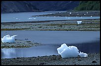 Icebergs and mud flats near Mc Bride glacier. Glacier Bay National Park, Alaska, USA.