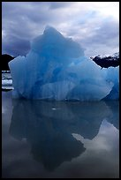 Blue iceberg, Mc Bride inlet. Glacier Bay National Park, Alaska, USA. (color)