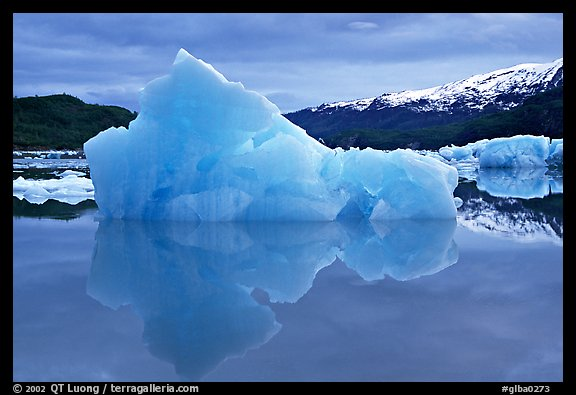 Blue iceberg, Mc Bride inlet. Glacier Bay National Park, Alaska, USA.
