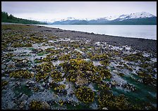 Tidal flats, Muir inlet. Glacier Bay National Park, Alaska, USA. (color)