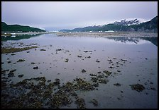 Mud flats near Mc Bride glacier, Muir inlet. Glacier Bay National Park, Alaska, USA.