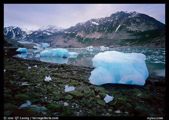 Icebergs and algae-covered rocks, Mc Bride inlet. Glacier Bay National Park (color)