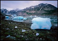 Icebergs and algae-covered rocks, Mc Bride inlet. Glacier Bay National Park, Alaska, USA.
