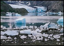 Icebergs, McBride Inlet, and McBride Glacier. Glacier Bay National Park, Alaska, USA. (color)