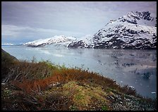 Snowy mountains and icy fjord seen from high point, West Arm. Glacier Bay National Park, Alaska, USA.