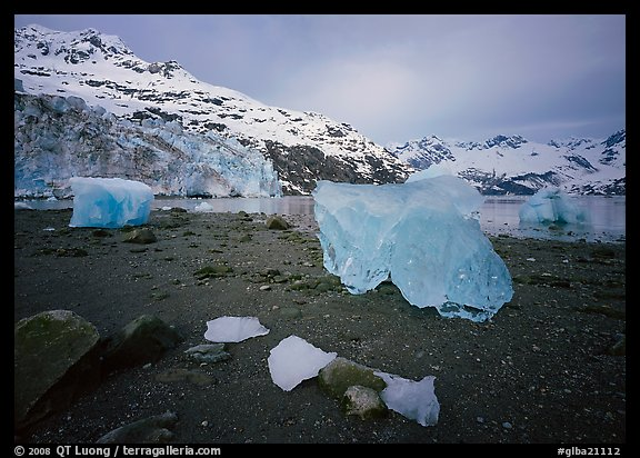Translucent icebergs at the base of Lamplugh Glacier, morning. Glacier Bay National Park (color)