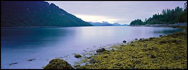 Moss-covered rocks in fjord. Glacier Bay National Park (Panoramic color)
