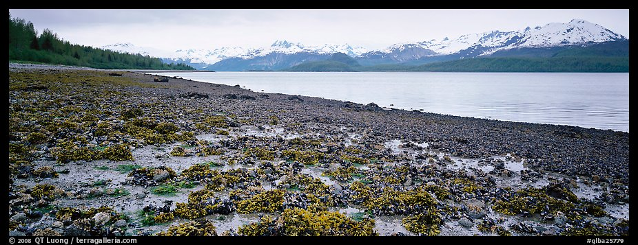 Shore with seaweed uncovered by low tide. Glacier Bay National Park (color)