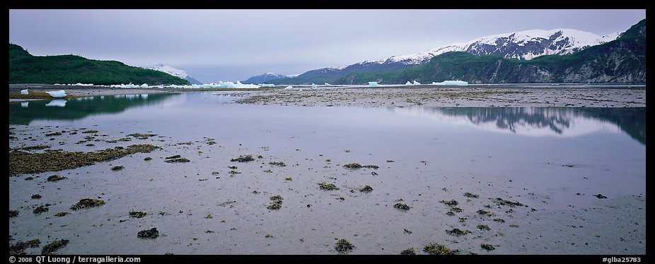Tidal flat with icebergs in the distance. Glacier Bay National Park (color)
