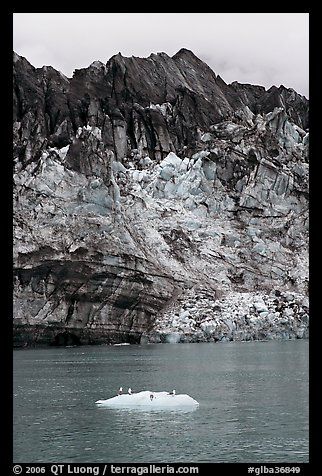 Iceberg, seabirds, and front of Margerie Glacier with black ice. Glacier Bay National Park, Alaska, USA.
